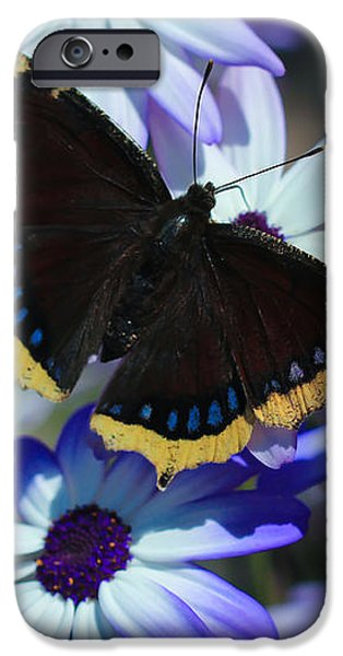 Butterfly In Blue iPhone Case by Heidi Smith