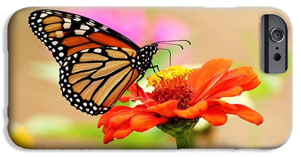 Framed Pyrography iPhone Cases - Butterfly Lunch iPhone Case by Lorna Rogers Photography