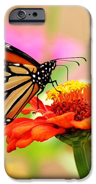 Butterfly Lunch iPhone Case by Lorna Rogers Photography