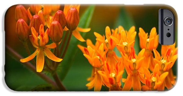 Close Up Floral iPhone Cases - Butterfly Milkweed iPhone Case by Adam Romanowicz