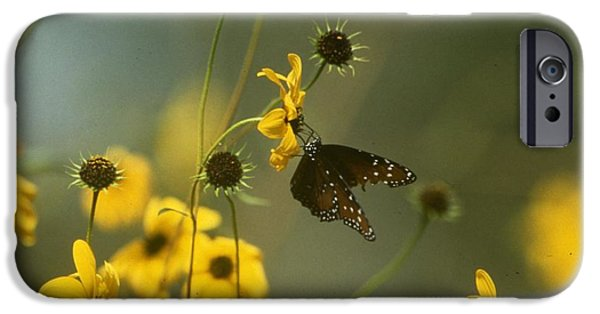 Archives iPhone Cases - Butterfly on a Flower iPhone Case by Retro Images Archive