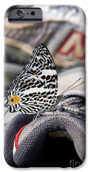 Sneaker iPhone Cases - Butterfly On Sneaker iPhone Case by Gregory G. Dimijian, M.D.