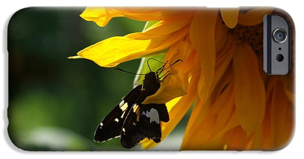 Etc. Photographs iPhone Cases - Butterfly On Sumflower.. iPhone Case by Rob Luzier