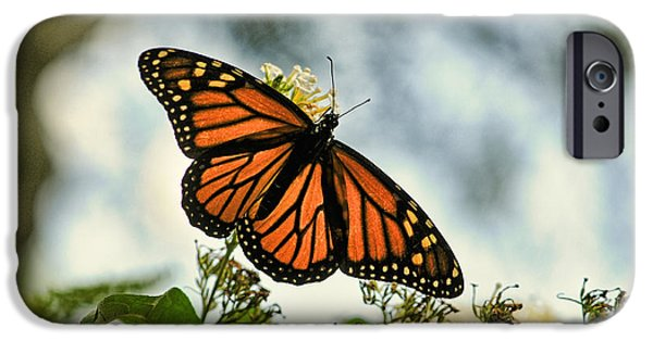Buterfly iPhone Cases - Butterfly - Open Wings iPhone Case by Paul Ward