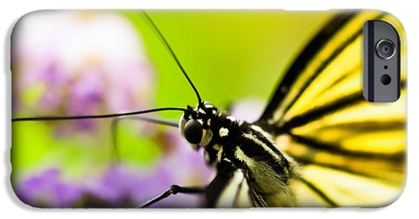 Animal Photographs iPhone Cases - Butterfly iPhone Case by Sebastian Musial