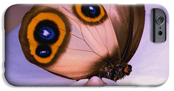 Etc... iPhone Cases - BUTTERFLY Silky Owl  Taenaris catops iPhone Case by Leslie Crotty