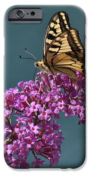 Butterfly iPhone Case by Simona Ghidini