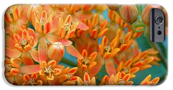 July iPhone Cases - Butterfly Weed iPhone Case by Jean Hall