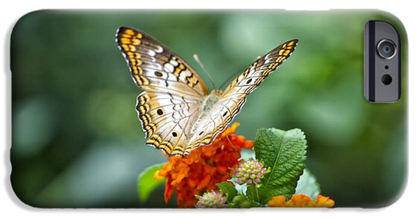 Central Il iPhone Cases - Butterfly Wings of Sun 2 iPhone Case by Thomas Woolworth