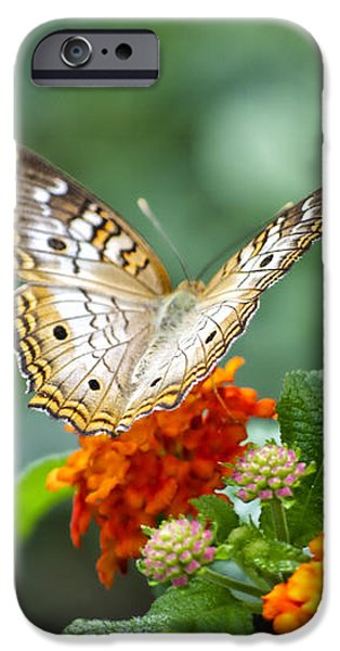Butterfly Wings of Sun 2 iPhone Case by Thomas Woolworth