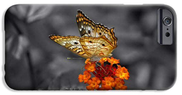 Central Il iPhone Cases - Butterfly Wings Of Sun Light Selective Coloring Black and White Digital Art iPhone Case by Thomas Woolworth