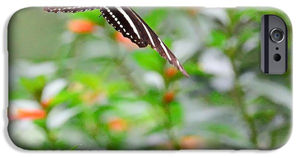 Butterfly iPhone Cases - Butterfly Zebra Soars and Floats to Next Orange Flower iPhone Case by Wayne Nielsen