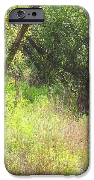 buttonwood forest iPhone Case by Rudy Umans