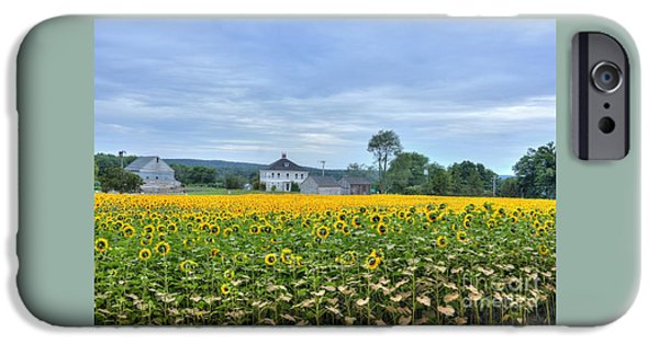 Agriculture iPhone Cases - Buttonwood Sunflower Farm iPhone Case by Marcel  J Goetz  Sr