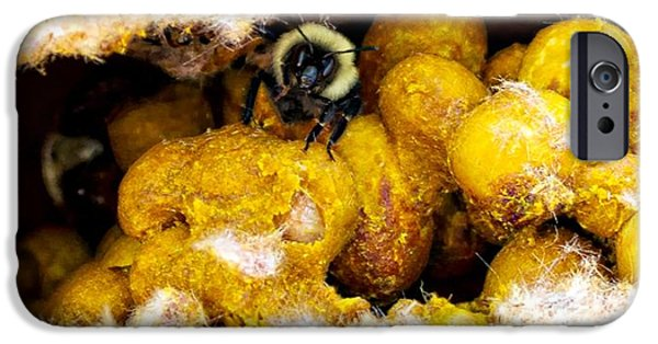 Hornets Nest iPhone Cases - Buzz off iPhone Case by Kristina Barnes