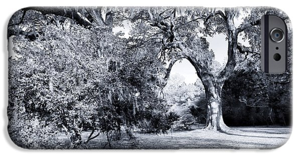 Historic Site iPhone Cases - By the Curved Tree iPhone Case by John Rizzuto