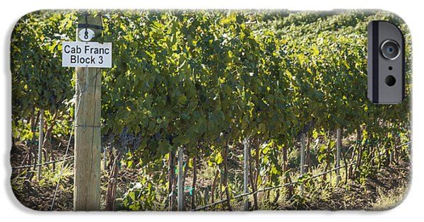 Vineyard Photograph iPhone Cases - Cab Franc iPhone Case by Juli Scalzi