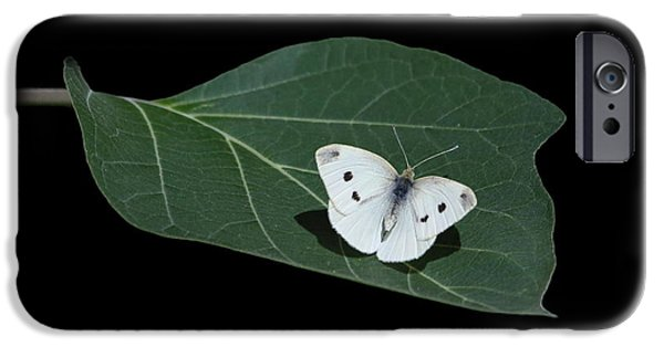 Cabbage White Butterfly iPhone Cases - Cabbage White Butterfly iPhone Case by Angie Vogel