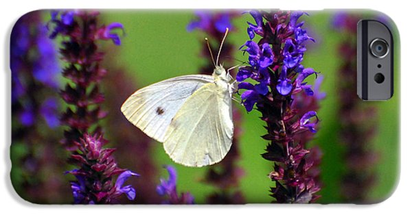 Cabbage White Butterfly iPhone Cases - Cabbage White Butterfly iPhone Case by Christina Rollo