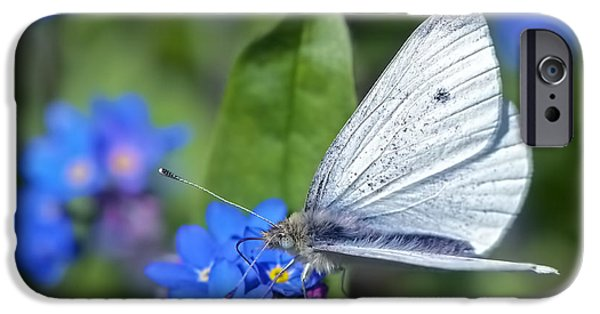 Cabbage White Butterfly iPhone Cases - Cabbage White Butterfly on Forget-Me-Not iPhone Case by Sharon  Talson