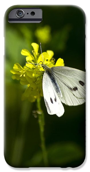 Cabbage White Butterfly iPhone Cases - Cabbage White Butterfly On Yellow Flower iPhone Case by Christina Rollo