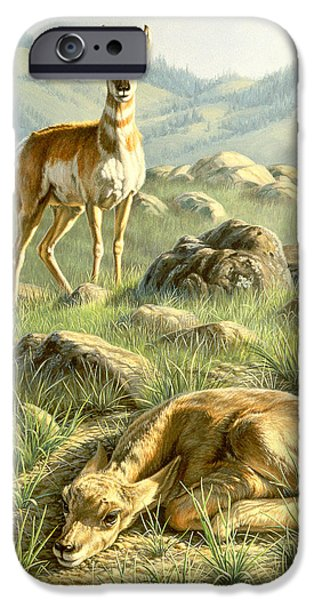 Fawn iPhone Cases - Cached Treasure - Pronghorn iPhone Case by Paul Krapf