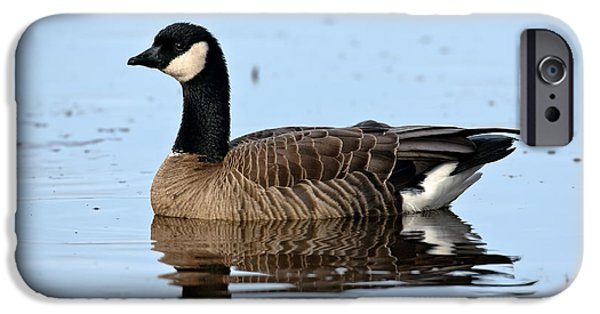 Us Wildllife iPhone Cases - Cackling Goose In Water iPhone Case by Anthony Mercieca