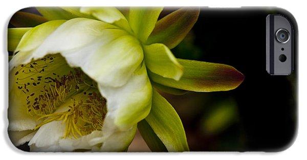 Cactus iPhone Cases - Cactus Flower 3 iPhone Case by Sharon Cummings