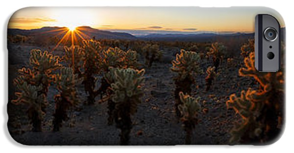 Plant iPhone Cases - Cactus Forest iPhone Case by Chad Dutson