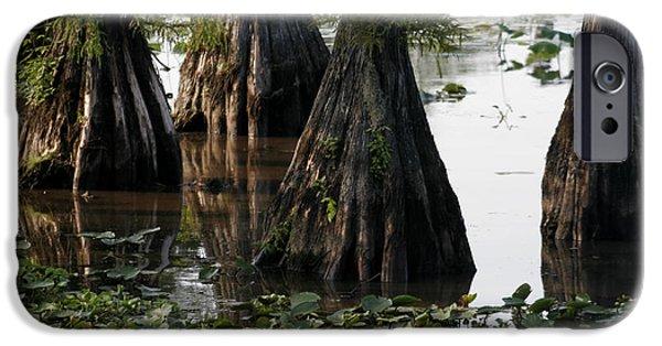 Karnak iPhone Cases - Caddo Lake Bayou 6 iPhone Case by Paul Anderson
