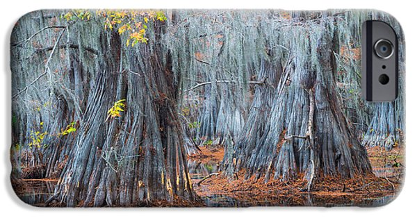 Bayou iPhone Cases - Caddo Lake Fall iPhone Case by Inge Johnsson