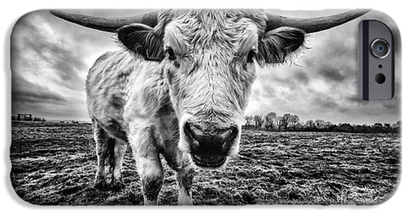 Coos iPhone Cases - Cadzow White Cow Female iPhone Case by John Farnan