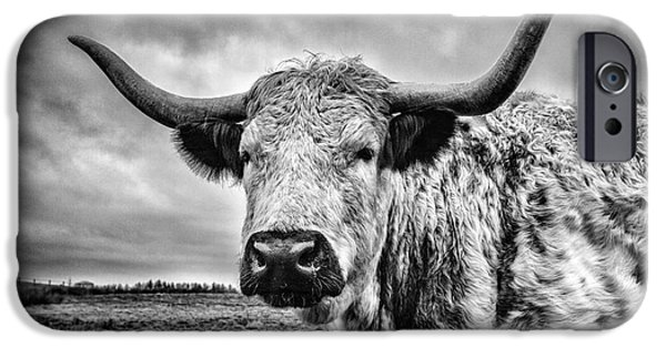 Species iPhone Cases - Cadzow White Cow iPhone Case by John Farnan