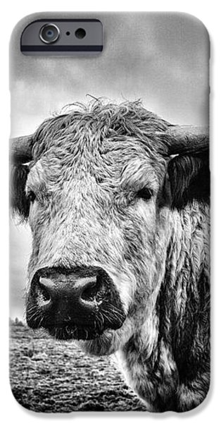 Cadzow White Cow iPhone Case by John Farnan