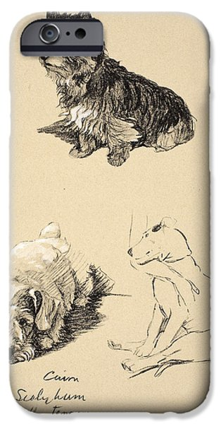 Black Dog iPhone Cases - Cairn, Sealyham And Bull Terrier, 1930 iPhone Case by Cecil Charles Windsor Aldin