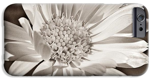 Organic Forms iPhone Cases - Calendula iPhone Case by Chris Berry