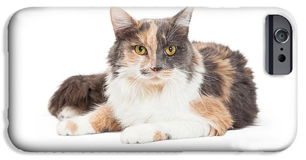 Domestic Animal iPhone Cases - Calico Domestic Longhair Cat Laying iPhone Case by Susan  Schmitz
