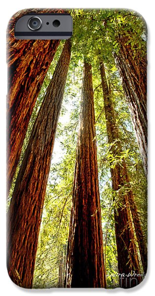 California Coastal Redwoods iPhone Case by Artist and Photographer Laura Wrede