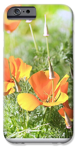 California Poppies iPhone Case by Artist and Photographer Laura Wrede