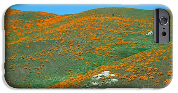 Agricultural iPhone Cases - California Poppies, Spring Wildflowers iPhone Case by Panoramic Images
