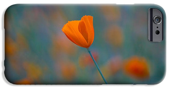 Poppies iPhone Cases - California Poppy iPhone Case by Anthony Bonafede