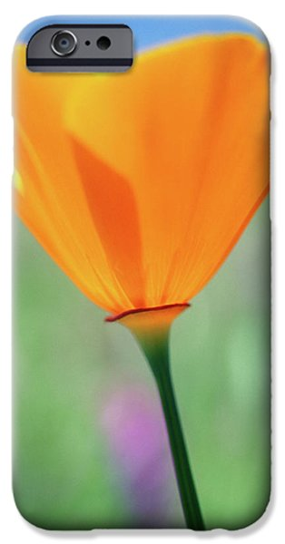 California Poppy iPhone Case by Kathy Yates