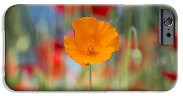 Meadow Photographs iPhone Cases - California poppy iPhone Case by Tim Gainey