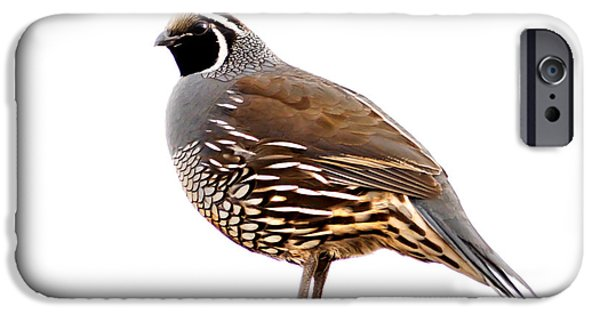 Recently Sold -  - Haybale iPhone Cases - California Quail iPhone Case by Robert Bales