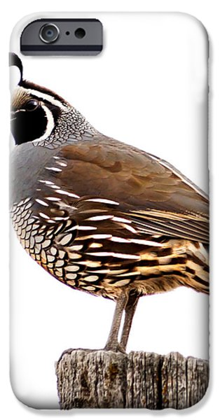 California Quail iPhone Case by Robert Bales