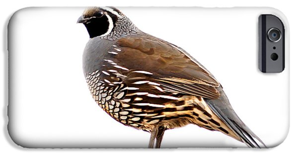 Haybale iPhone Cases - California Quail iPhone Case by Robert Bales