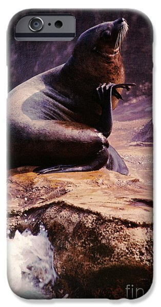 California Sea Lions iPhone Cases - California Sea Lion Raising a Flipper iPhone Case by Anna Lisa Yoder