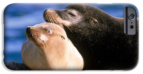 California Sea Lions iPhone Cases - California Sea Lions iPhone Case by Mark Newman