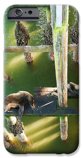 California Sealions Under the Santa Cruz Pier iPhone Case by Artist and Photographer Laura Wrede