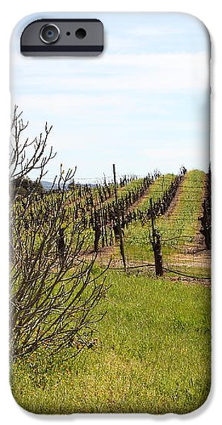 California Vineyards In Late Winter Just Before The Bloom 5D22121 iPhone Case by Wingsdomain Art and Photography
